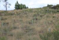 A Chaira Tqd3 La Sequà A Acabà Con El 80 Del Bosque Autà Ctono De A Chaira