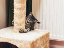 Proteger sofa De Gato