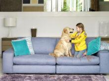 Sofas Cama Galea Kvdd sofas Cama Galea Planes Con Tu Perro Dog Vivant