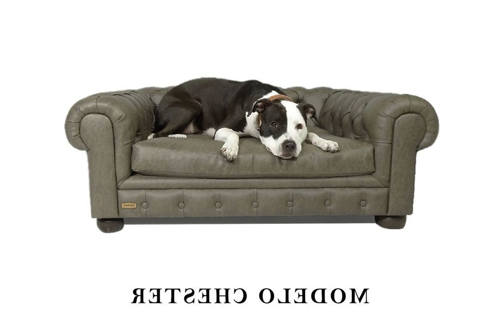 Sofas Para Perros 9ddf sofà Para Perros Mod Chester Canapà Habano Extra Large