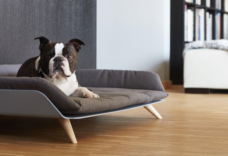 Sofas Para Perros Budm Este sofà Es El Sueà O De Cualquier Perro Urbes