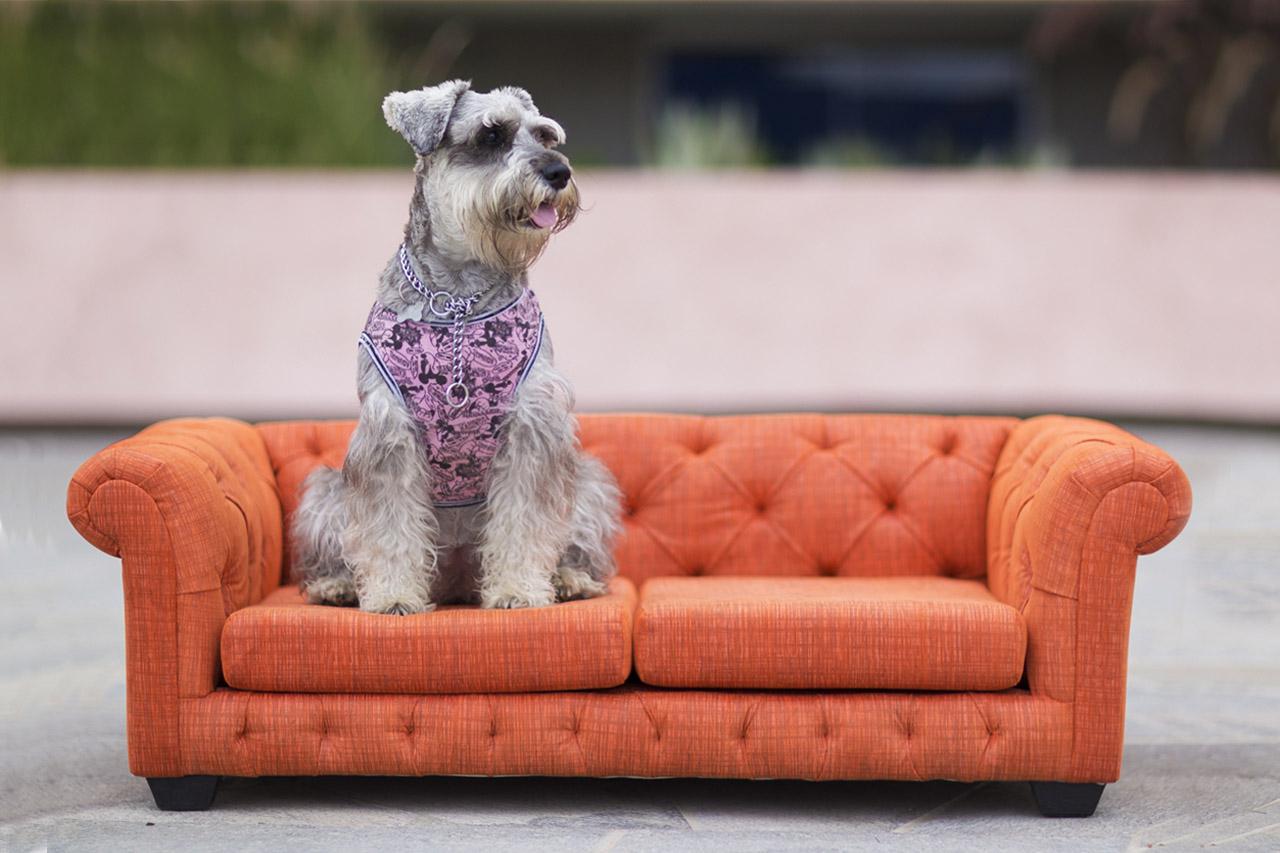 Sofas Para Perros Gdd0 Camas Para Perros Grandes En Lima sofas Para Perros Y Gatos Nuku