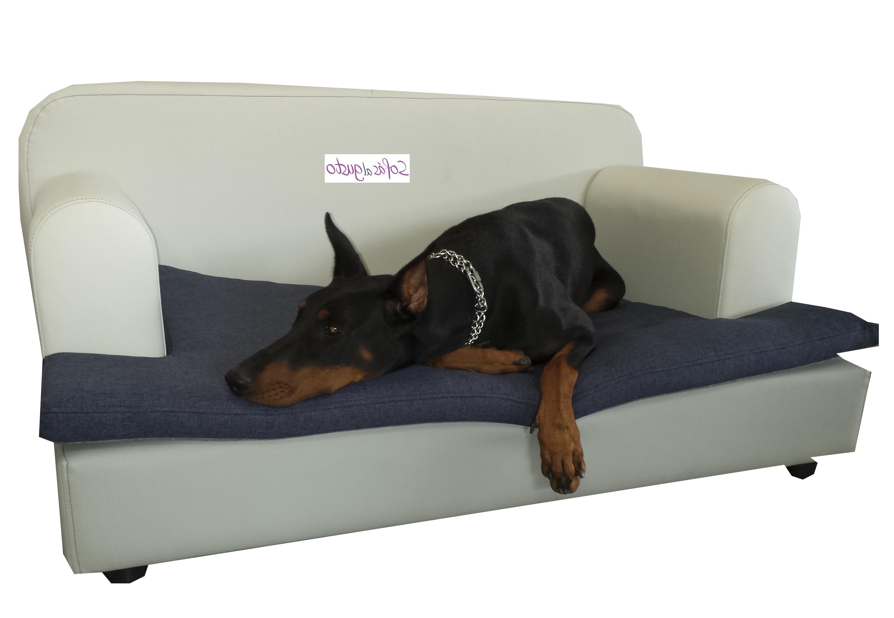 Sofas Para Perros Q5df Xectal Consejos Para Quitar Olores Y Limpiar Un sofà Para Perros