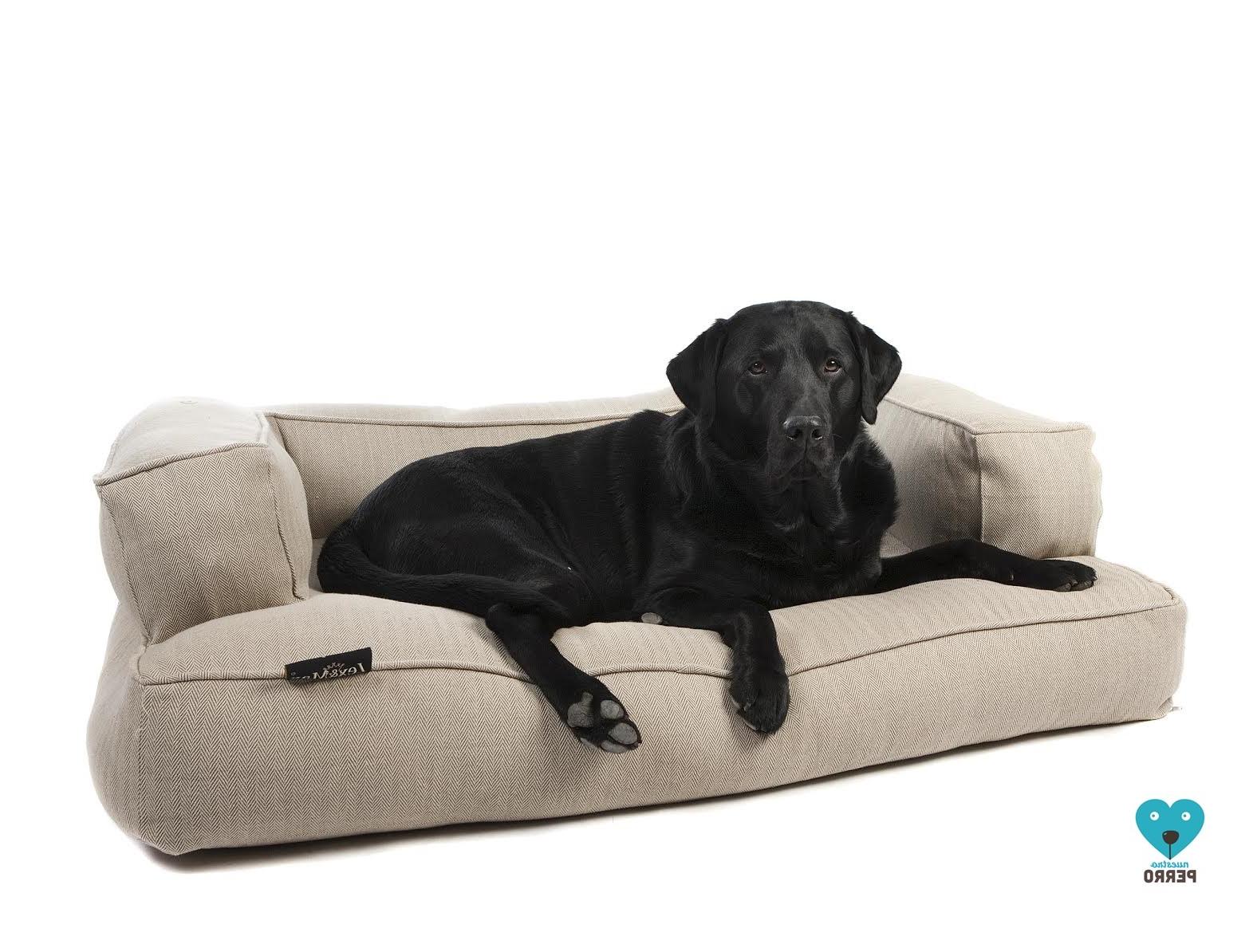 Sofas Para Perros Zwd9 Lex Max sofà S De Viscoelastica Para Perro